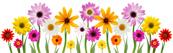 мартовские цветы